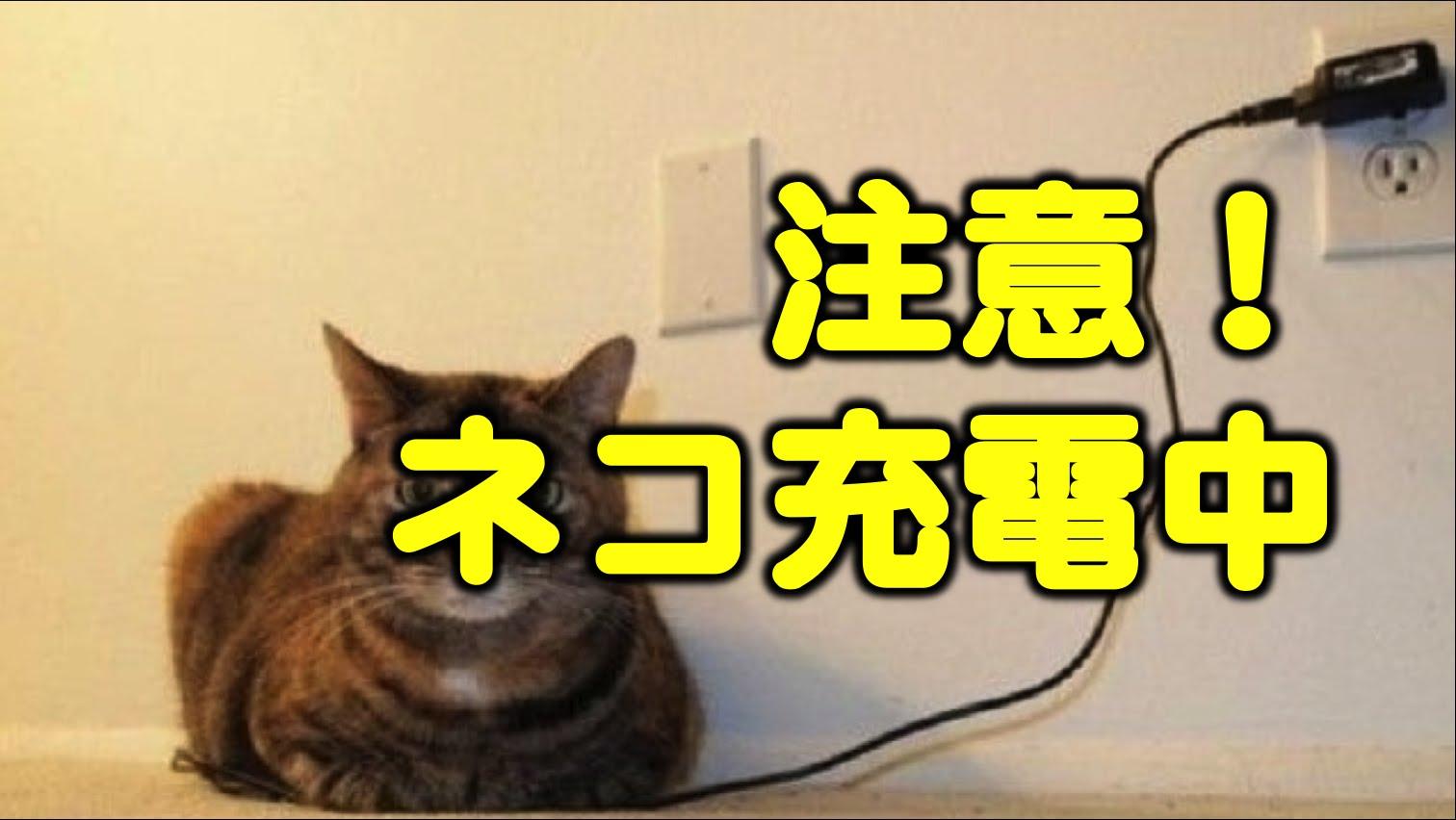 【注意!】ネコ充電中に癒されろ♪